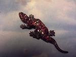 salamander s.JPG